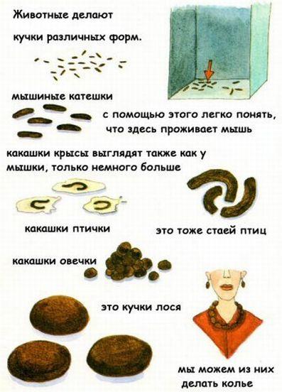 Маленькая книжка о какашках (9 скринов)